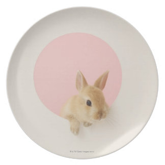Oryctolagus cuniculus 3 party plates