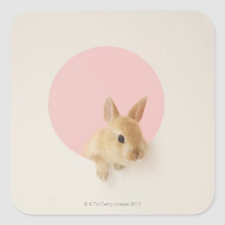 Oryctolagus cuniculus 3 square sticker