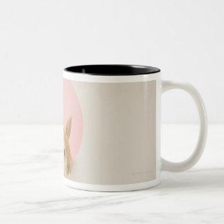 Oryctolagus cuniculus 3 Two-Tone coffee mug