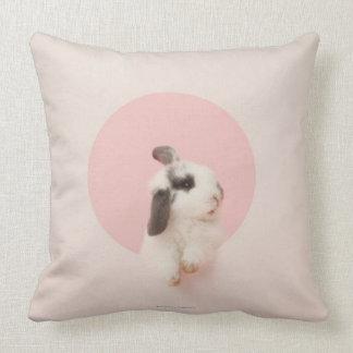 Oryctolagus cuniculus pillows