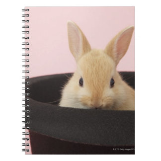 Oryctolagus cuniculus spiral notebooks