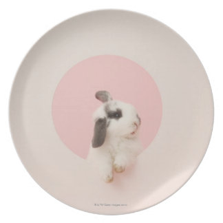 Oryctolagus cuniculus party plates
