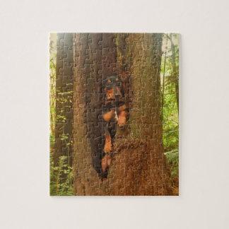Oscar in a Tree Jigsaw Puzzle