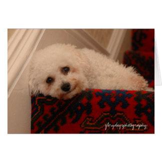 Oscar on the steps, waiting her return card