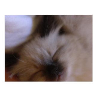 Oscar The Kitten Postcards