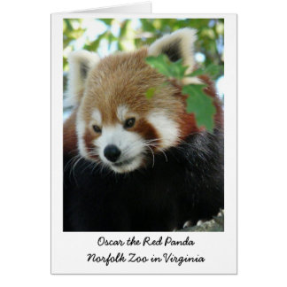 Oscar the Red Panda Card