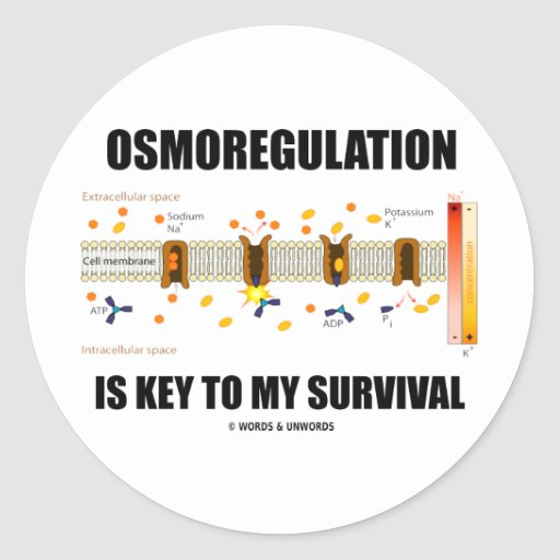Osmoregulation Is Key To My Survival Round Stickers