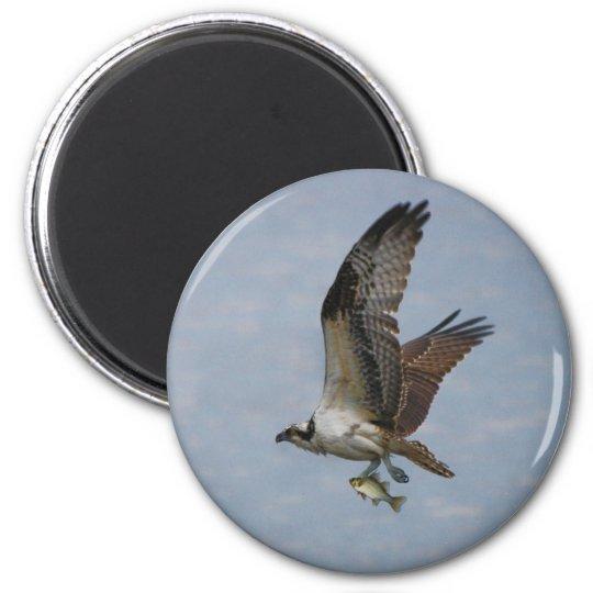 Osprey 6 Cm Round Magnet