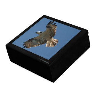 Osprey Bird Animal Wildlife Fish Sea Gift Box