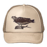 Osprey Bird Cap