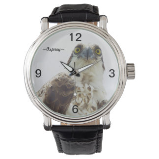 Osprey bird eyes portrait Watch