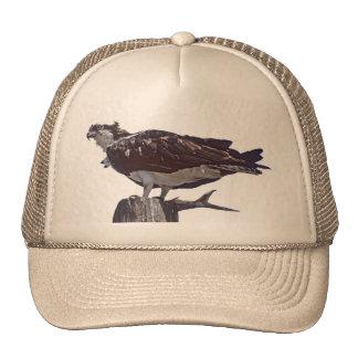 Osprey Bird Hats