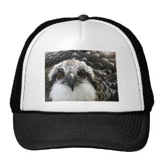 Osprey Trucker Hats