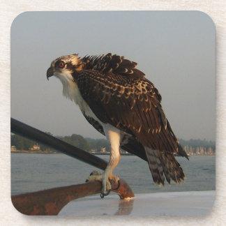 Osprey Hawk Coaster
