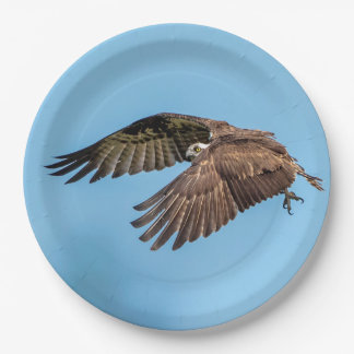 Osprey in flight at Honeymoon Island State Park Paper Plate