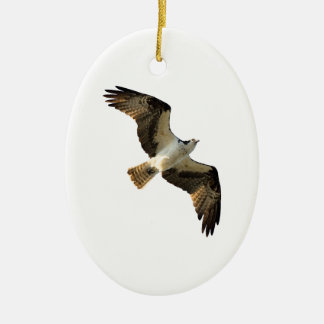 Osprey in Flight Logo Ceramic Oval Decoration