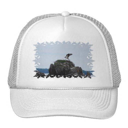 Osprey Landing Baseball Hat