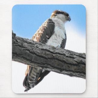 Osprey Mouse Pad