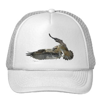 Osprey or hawk flying Hat