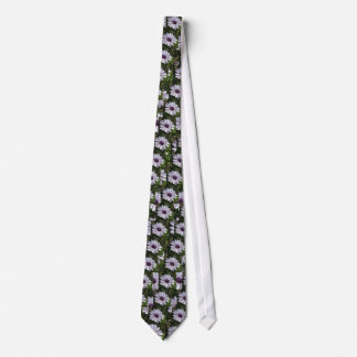 Osteospermum African Daisy Tie