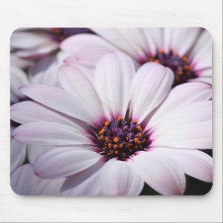 Osteospermum Mouse Pad