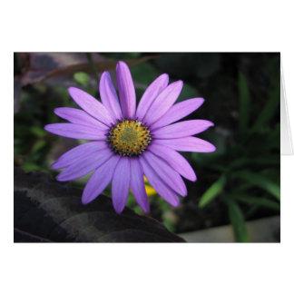 Osteospermum Stardust Flower Greeting Card