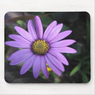 Osteospermum 'Stardust' Mousepad
