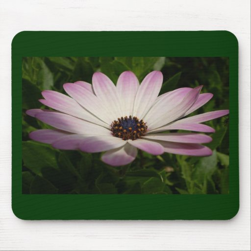 Osteospermum: Whiter Shade of Pale Mousepad