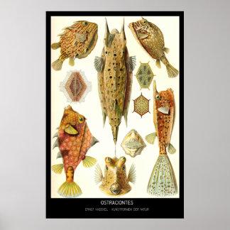 Ostraciontes – Plate 42 - Kunstformen der Natur Posters