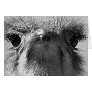 Ostrich #1-Greeting card