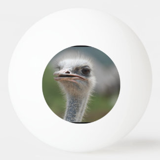 Ostrich Bird Ping Pong Ball
