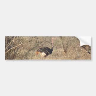 Ostrich Bumper Sticker, African Safari Collection Bumper Sticker