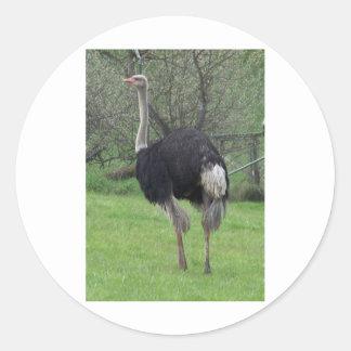 Ostrich Classic Round Sticker