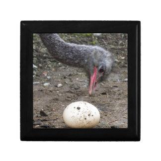 ostrich egg gift box