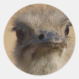 Ostrich Funny Face Round Sticker