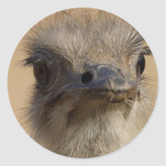 Ostrich Funny Face Round Sticker
