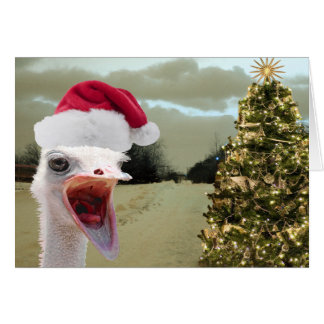 Ostrich Gets Excited Over Christmas Greeting Card