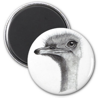 OSTRICH HEAD IN PENCIL: ART: REALISM MAGNET