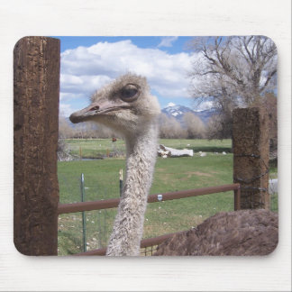 Ostrich Head Mouse Pads