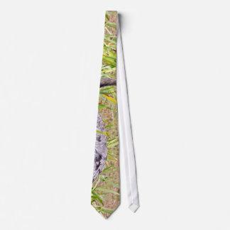 Ostrich In Grass Tie