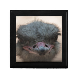 ostrich in the farm small square gift box