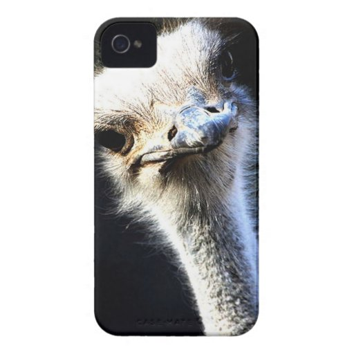 Ostrich iPhone 4 Cases