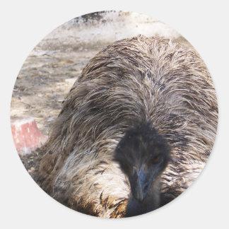 Ostrich.jpg Round Sticker