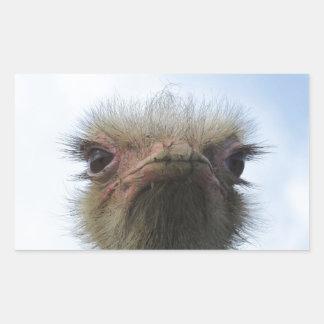 Ostrich Portrait Rectangular Sticker