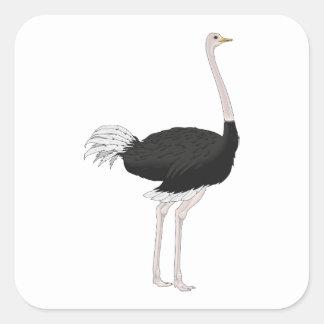 Ostrich Square Sticker