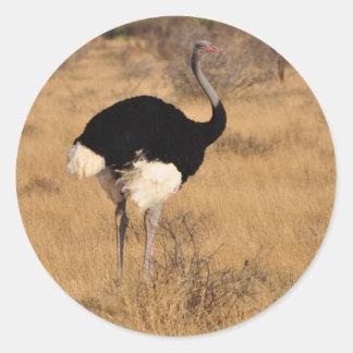 Ostrich Sticker 1