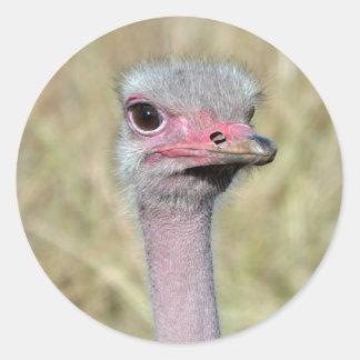 Ostrich Sticker 2