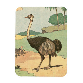 Ostrich Storybook Drawing Rectangular Photo Magnet