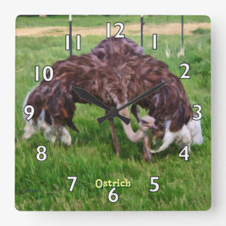 Ostrich Sunning Square Wall Clock