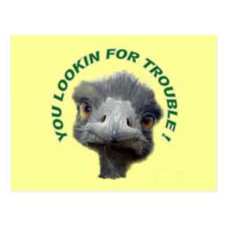 Ostrich trouble postcard